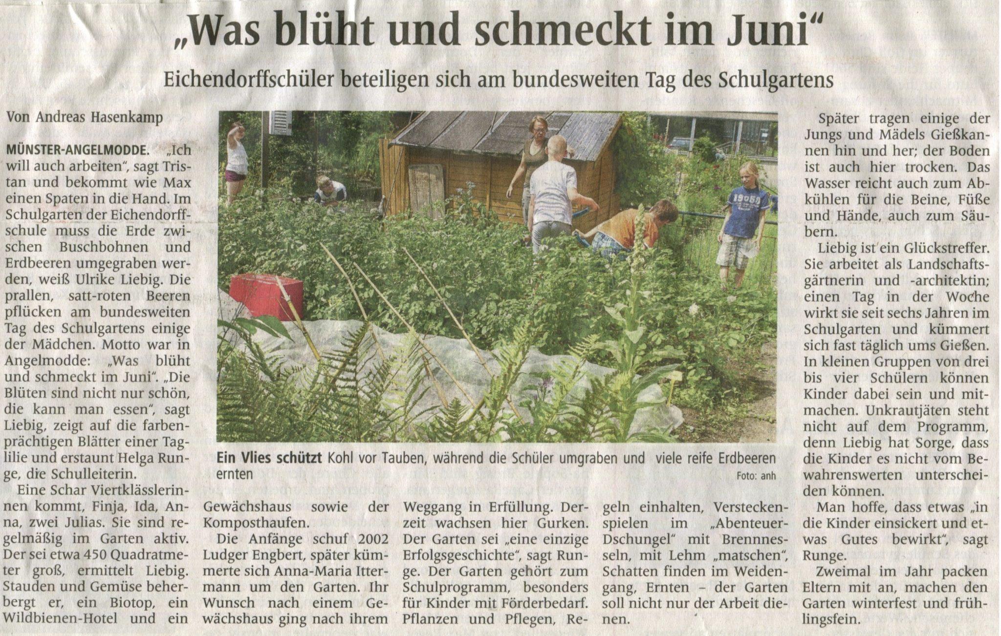 Was blüht und schmeckt im Juni (Westfälische Nachrichten, 22.06.2017)